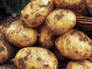 Potatoes, Dirty, 1Kg