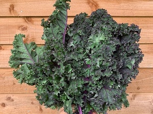 Kale, Organic Red Curly, 300 gms