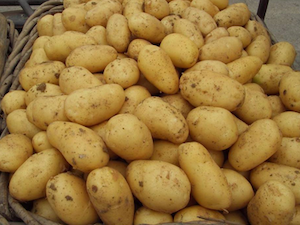 Potatoes, Melody, 25kg sack