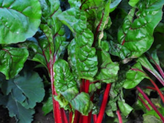 Naturally Grown Red Chard – approx 200g