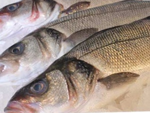 Sea Bass, 450g approx