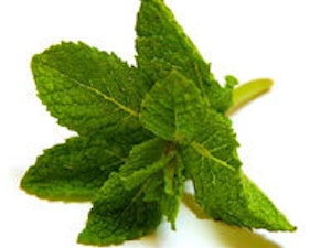 Mint – 100g approx.