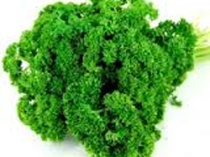 Parsley, Curly Leaf, 100g
