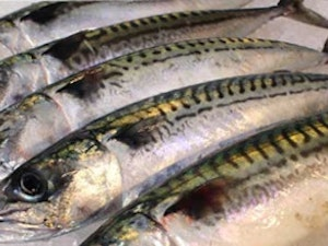 Cornish Mackerel each – cleaned and ready for cooking, 250g approx