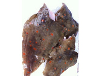 Brixham Plaice Fillets from 200g.