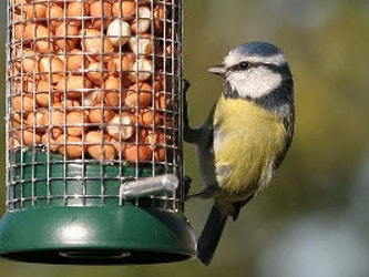 Peanuts for the Birds, 1kg.
