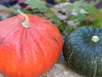 Somerset Grown Kabocha Squash (red or green), each, 1kg approx