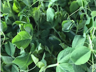 Naturally Grown Pea Shoots 75g