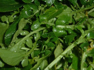 Watercress – bunched