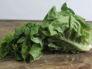 Little Gem Lettuce – Pack of 2