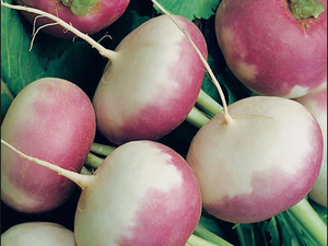 Turnips, Purple Top, 500g