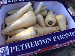 Parsnips, washed, 5kg box