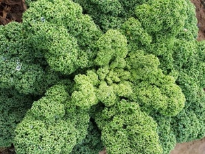 Curly Kale, 300gms