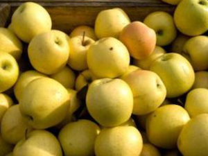 Apples, Golden Delicious, 1kg