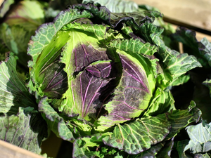 Cabbage, January King, each