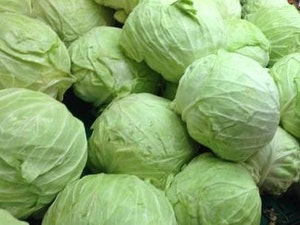 Cabbage, White, each
