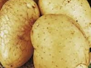Potatoes, Organic White, 750g