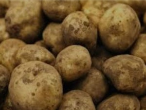 Potatoes, Organic New Charlotte, 750g