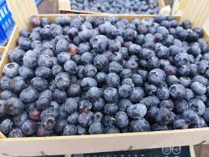 Blueberries, Organic, Punnet, 125g