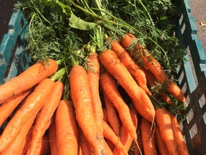 Carrots, Bunched