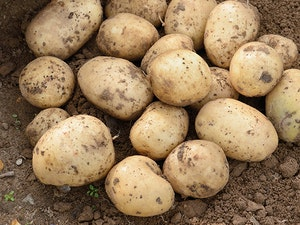Potatoes, New Casablanca, 750g