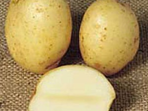 Potatoes, Organic Valour, 1kg