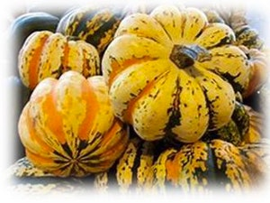 Squash, Organic Festival, each (Typical weight 0.6kg)