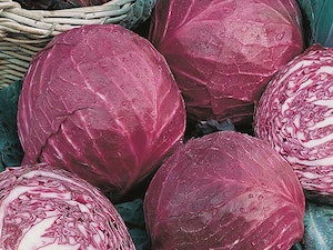 Cabbage, Organic Red, each