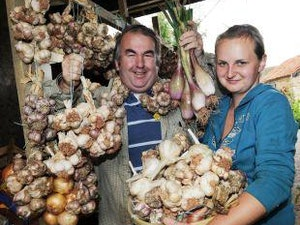 Garlic Bulb, large, each
