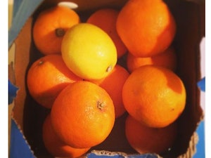 Oranges, Organic Seville, 1kg (for Marmalade making)