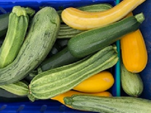 Courgettes, Mixed, Naturally Grown, 500gms