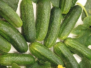 Gherkins (for pickling), Local, 400gms