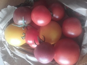 Mixed Tomatoes, Organic, 500gms