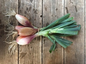 Shallots, Organic, Frexh & Bunched