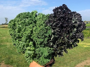 Kale,Curly, Green & Red, Naturally Grown  300gms